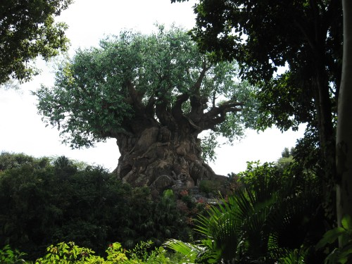 The Tree of Life