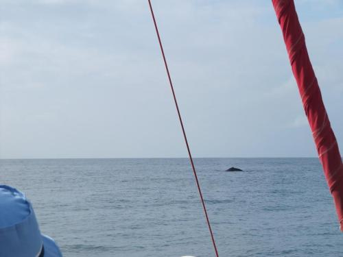 ...a whale too! We saw dozens of humpback whales during our stay. More in Maui than Kauai. We saw lots of pectoral slaps, fins, tails and even breaching whales and babies. It was great!